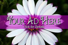 Advertise on Hidden Treasures!