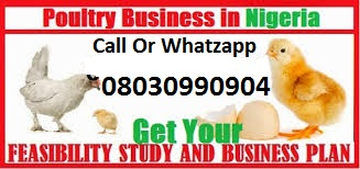 Poultry Business In Nigeria