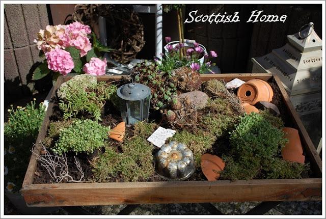 Scottish home sukkulenten auf dem tisch - Sukkulenten garten ...