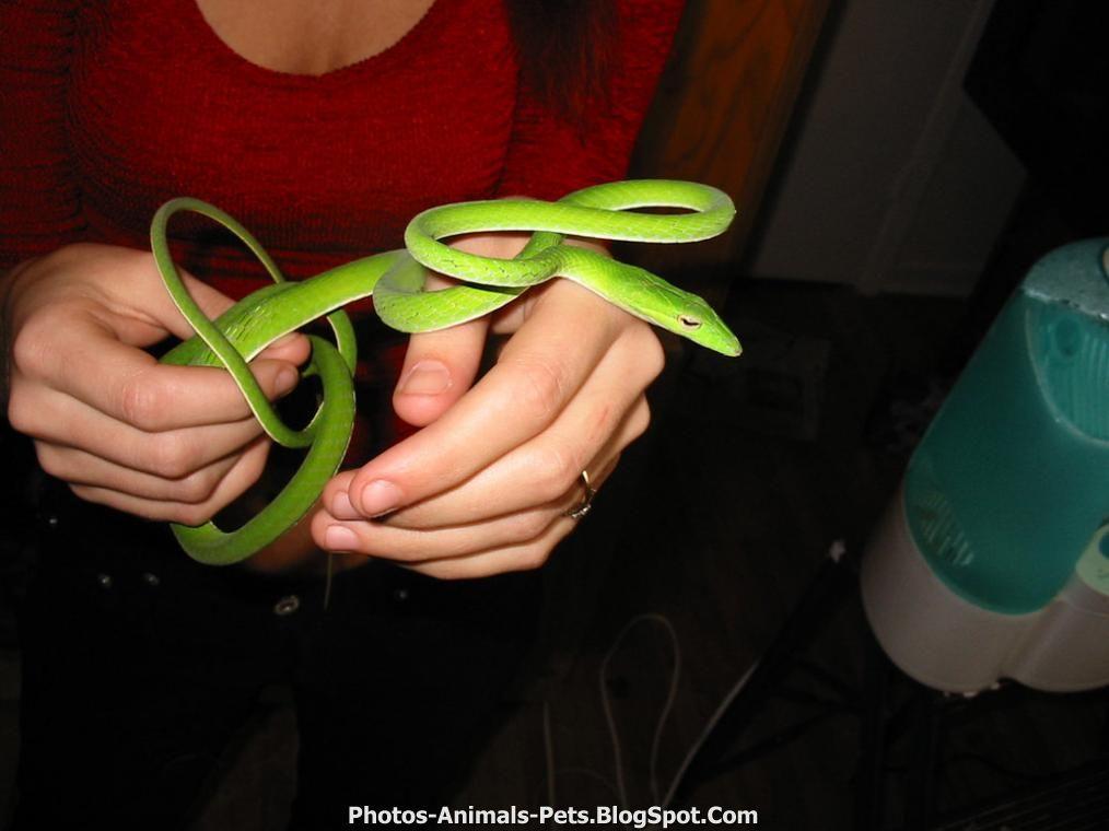 http://1.bp.blogspot.com/-2LVl8egORYI/TxGxfGzhrNI/AAAAAAAACtg/P3pt1c6uvFc/s1600/Snakes%2Bpictures%2B.jpg