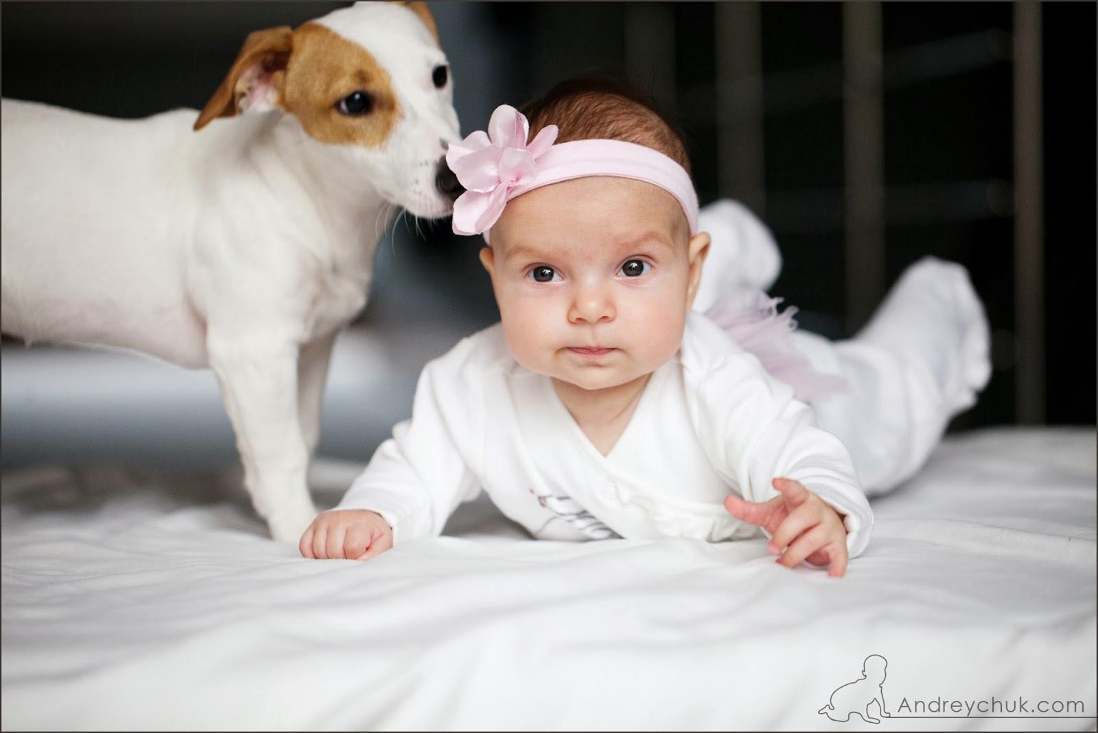 собака, ребенок
