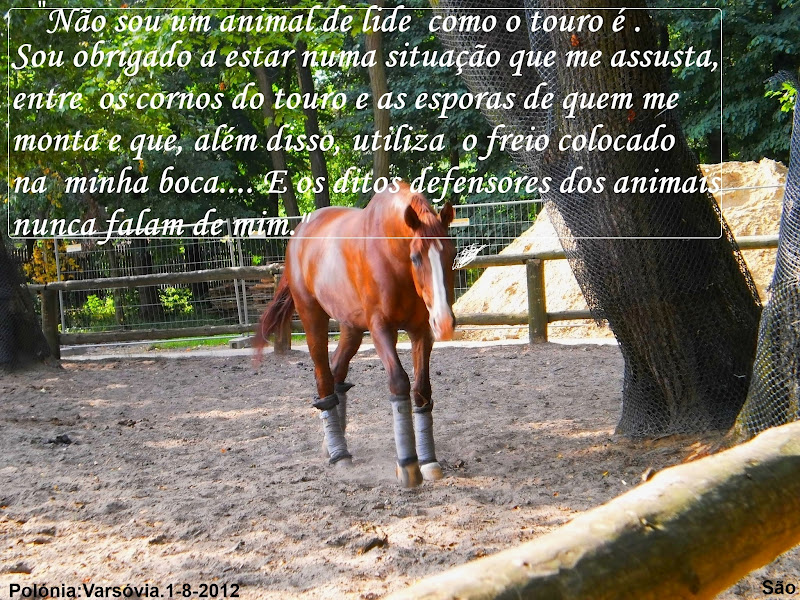 São E Os Cavalos