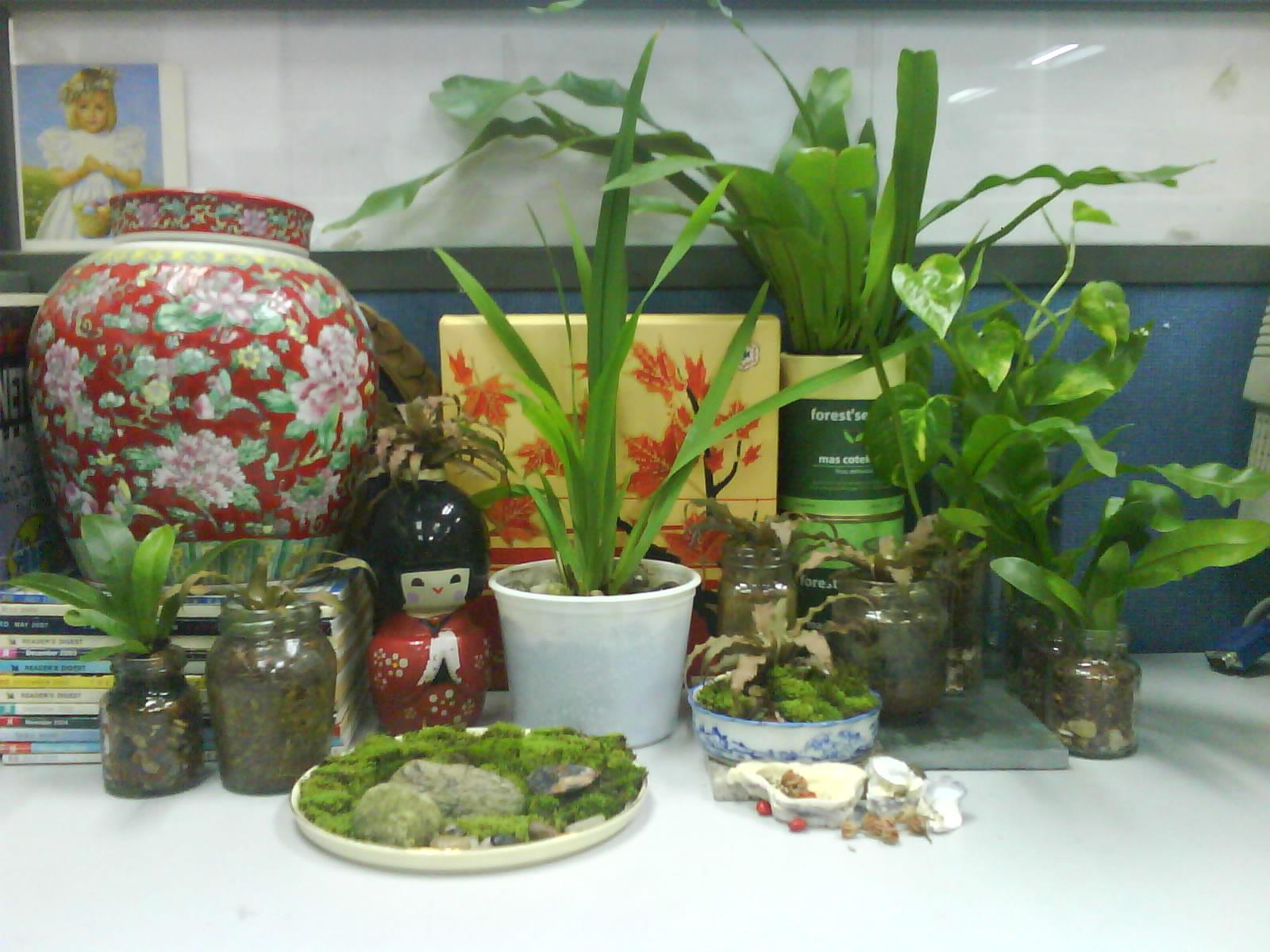 Garden chronicles indoor plants for the office desk top - Indoor desk plants ...