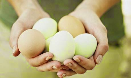 Today Eggs Price List in Pakistan | Today Price List Alerts