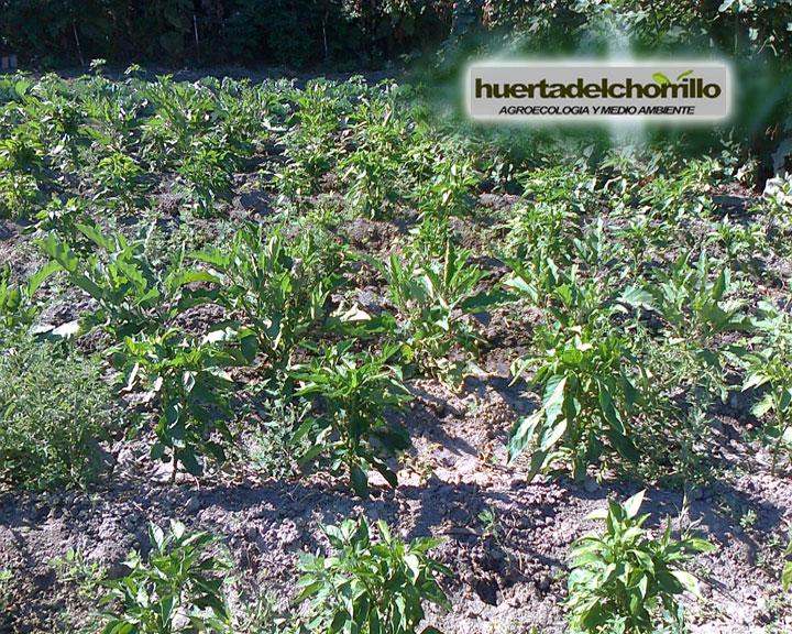 Huerta del chorrillo vuestro jard n un huerto sano y natural for Huerto y jardin