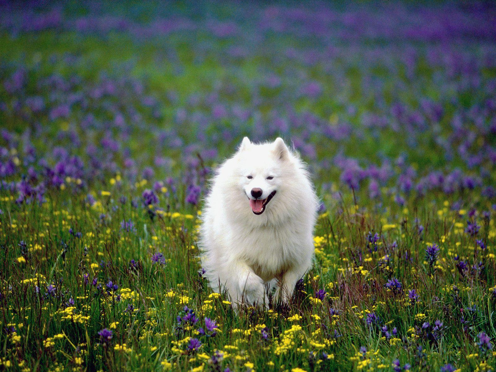 http://1.bp.blogspot.com/-2MFH1RG5Vgc/T7aib0rdalI/AAAAAAAAHUY/lyZkh10AC9w/s1600/beautiful+dog.jpg