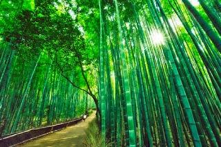 Soie de Bambou, Tissu Écologique