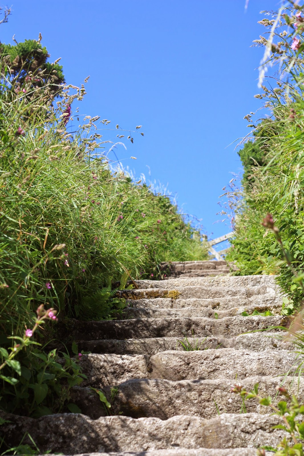 Stone steps surrounded by wild plants under a deep blue sky