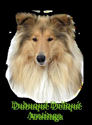 http://hairyhope.blogspot.cz/p/dubuque-delique-aratinga.html