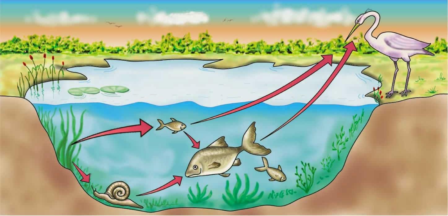 Funcionamento básico de um ecossistema