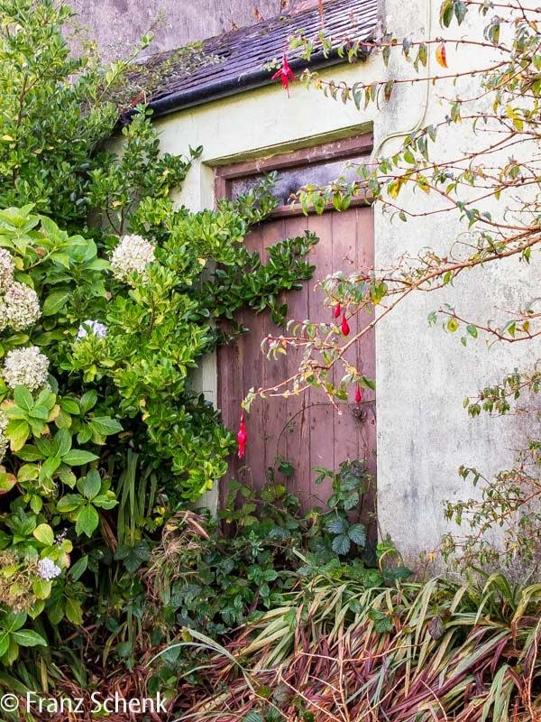 Door of derelict cottage at Old Road, Caherciveen