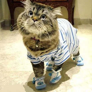 cat in PJs