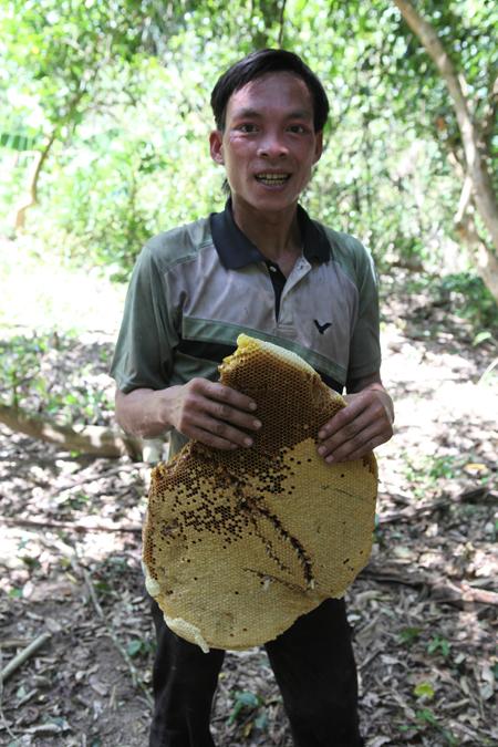 """Săn ong mật - nghề của những """"lá gan lớn"""""""