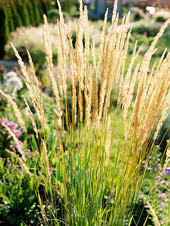 7 awesome ornamental grasses for every cottage garden for Small landscape grasses