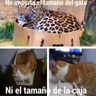 No importa el tamaño del gato ni el tamaño de la caja