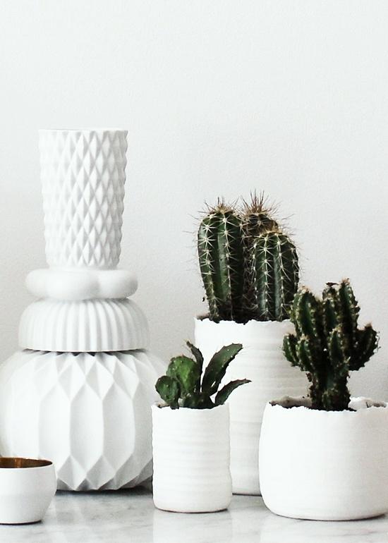 Cactus plants and indoor on pinterest - Cactus de interior ...