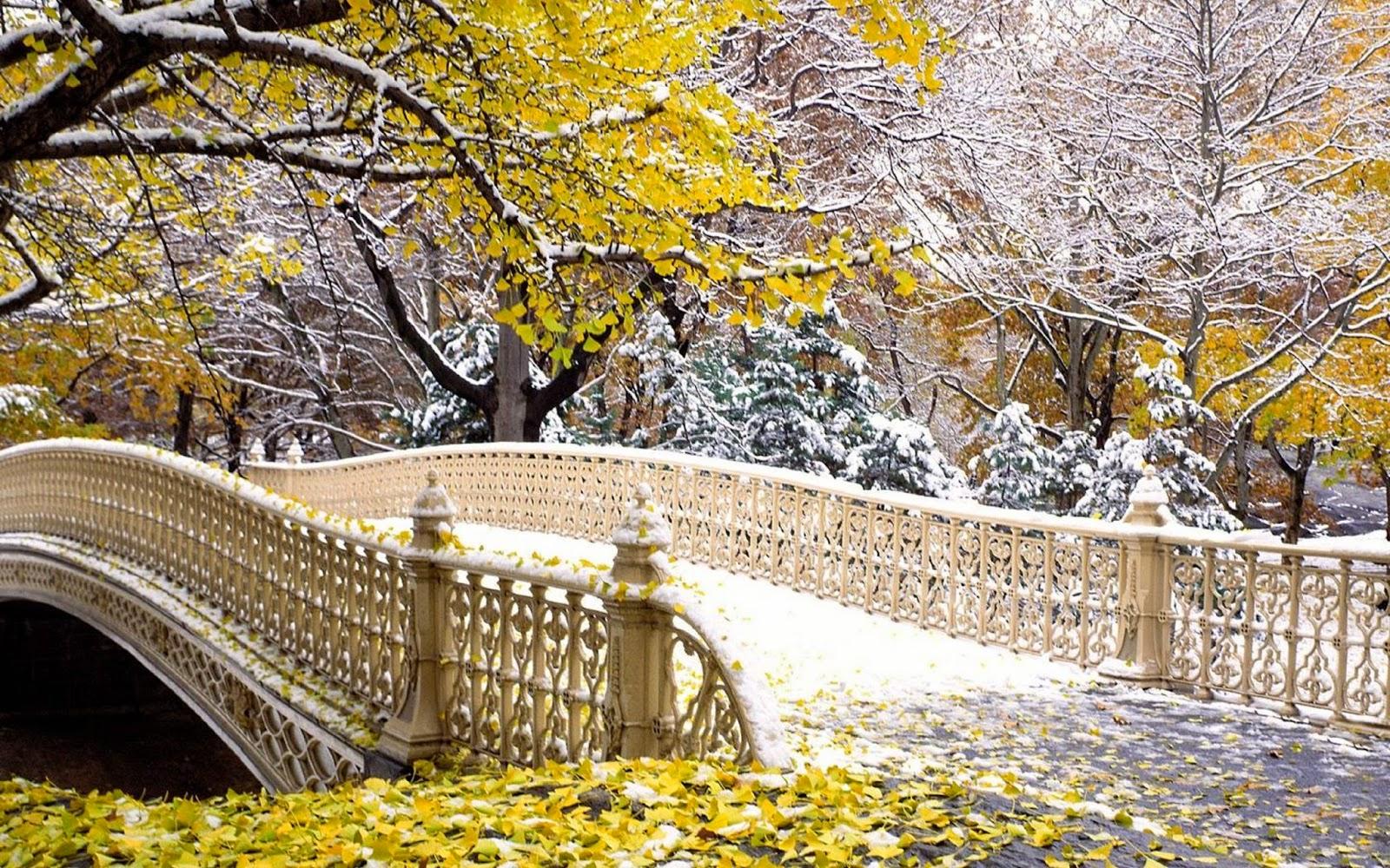 hình ảnh cây cầu đẹp