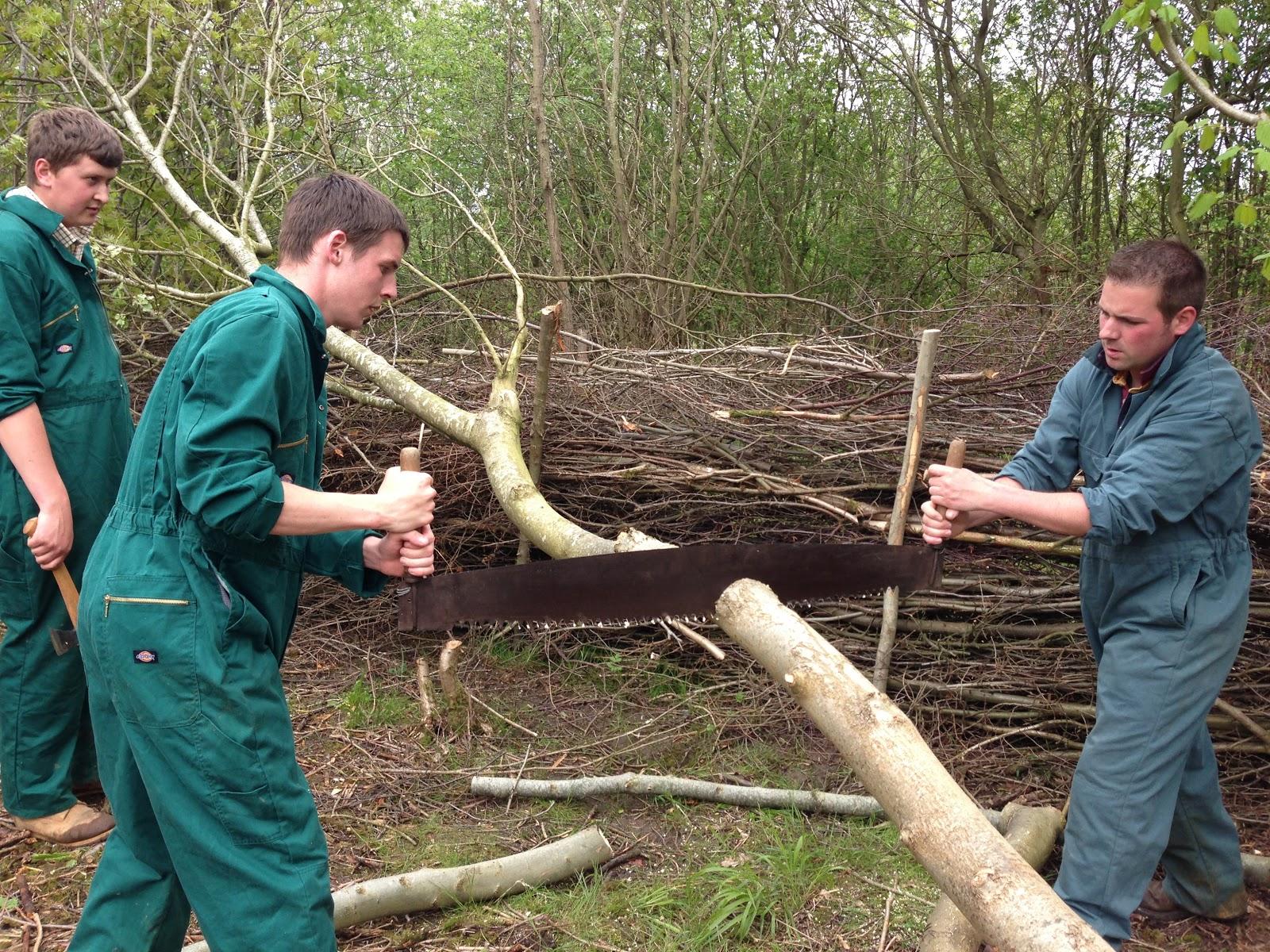 Countryside management dissertation