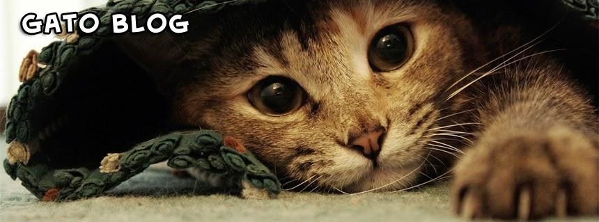 El Blog de los Gatos