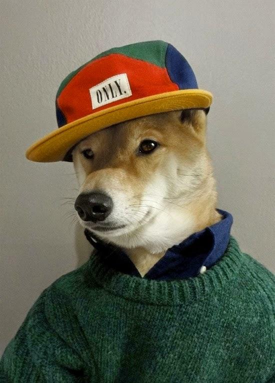 يلبس الكلب لباس شتوي مع كاب