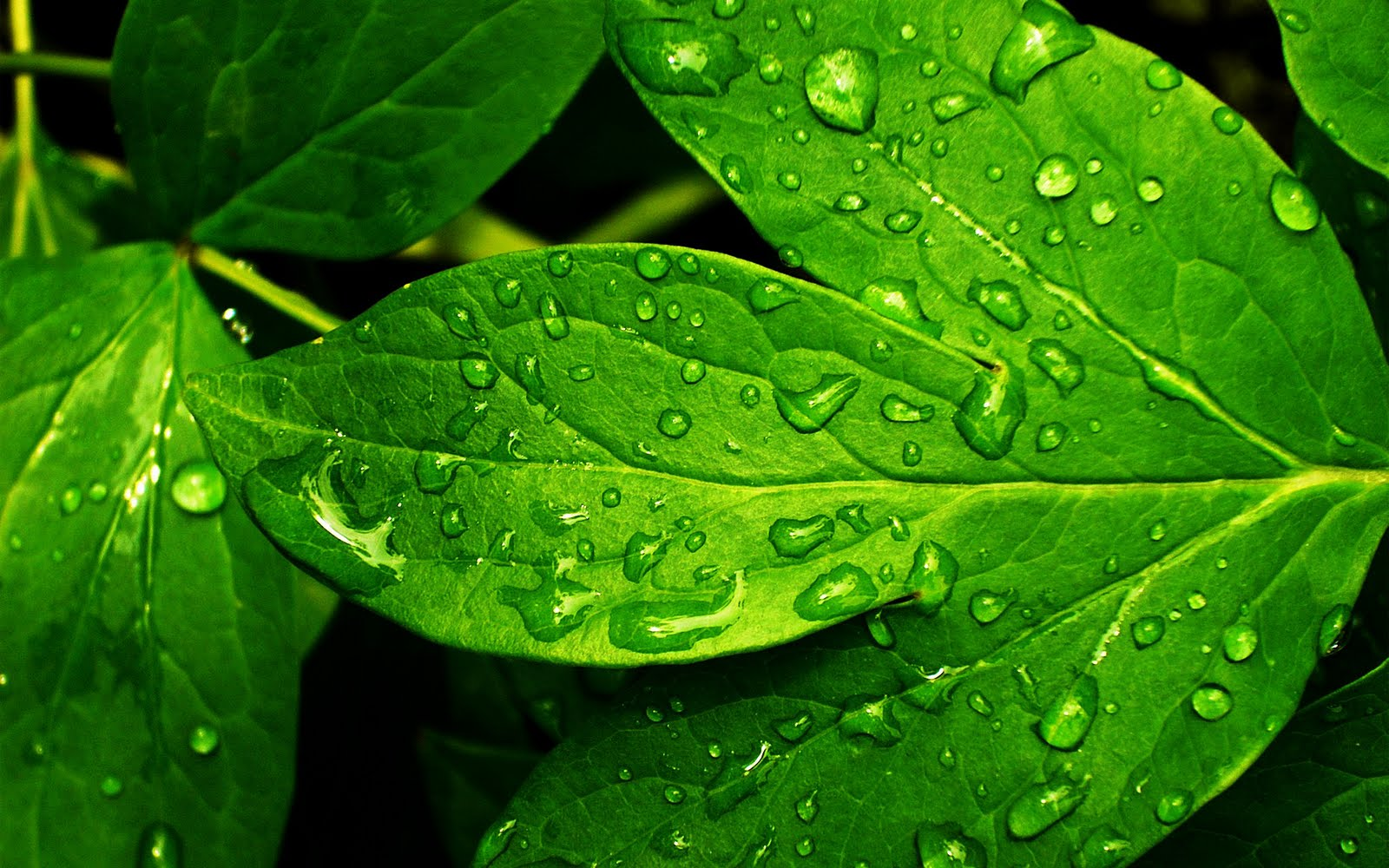 central wallpaper rain drops on leaf hd close up wallpapers