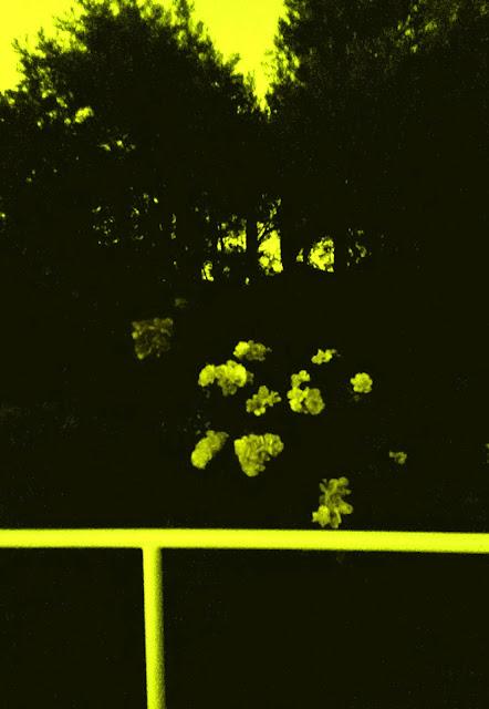 Verano 2015, Solsticio de verano, San Juan, Fiestas, Calor, Fotografía, Yvonne Brochard, Blogs de arte, Exposiciones, Madrid, Voa-Gallery.blospot.com, Arte contemporáneo, Victim of art, Rosas, Rosales,