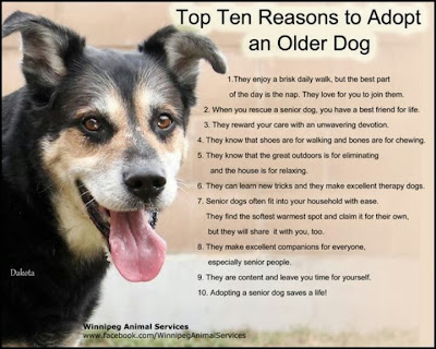 Do Dogs Get Grumpy With Age