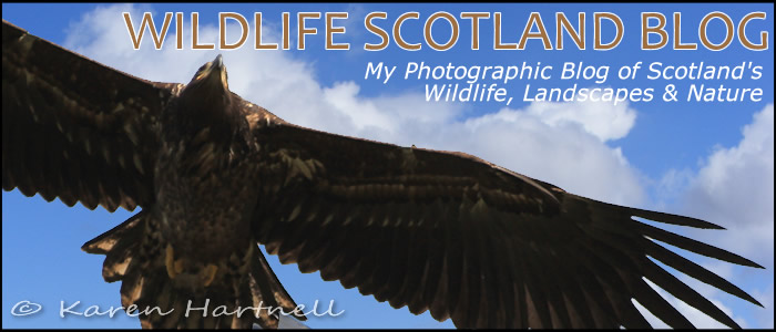 Photo Blog of Scotland