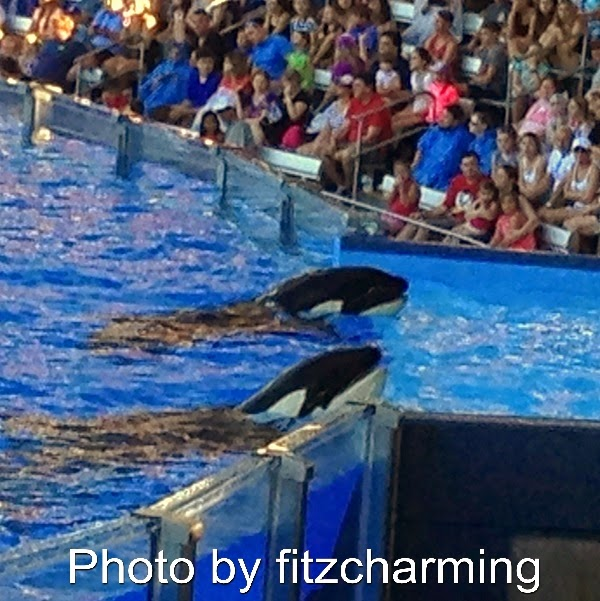 Fitzcharmings Sea World Trip