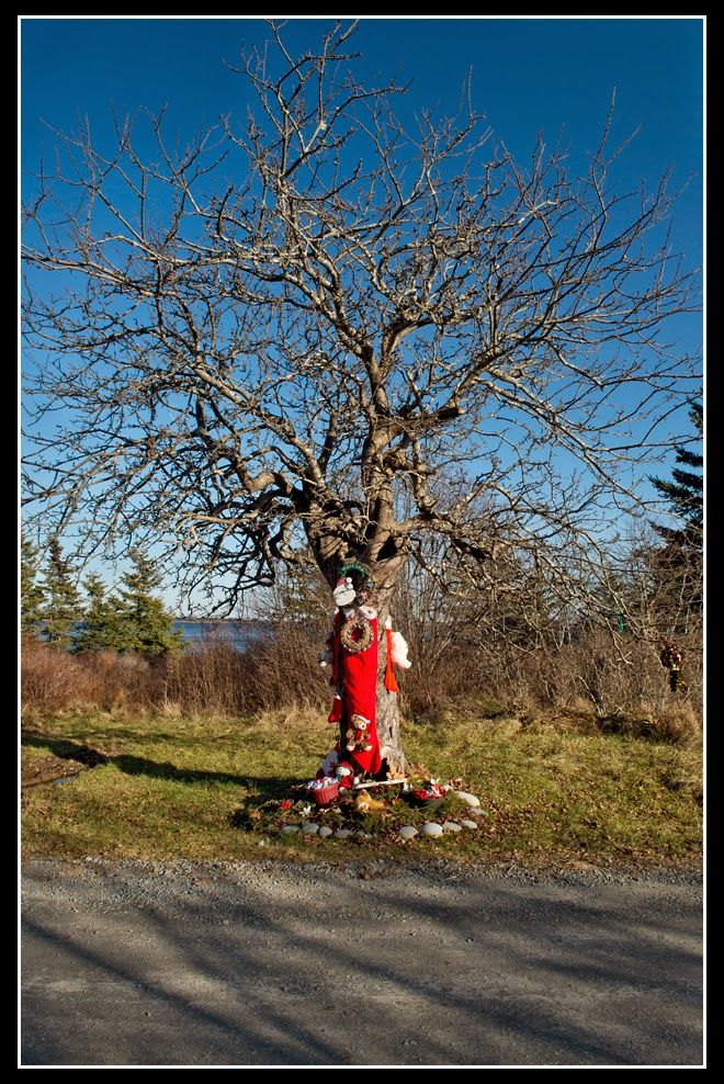 Nova Scotia; Long Cove; Christmas Tree