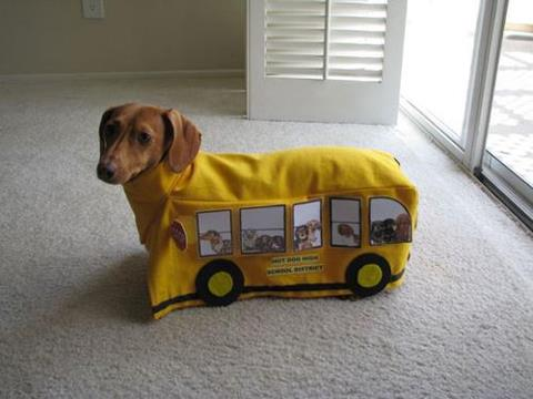 Cute and Funny Pictures and more: Little wiener Dog in a bus costume