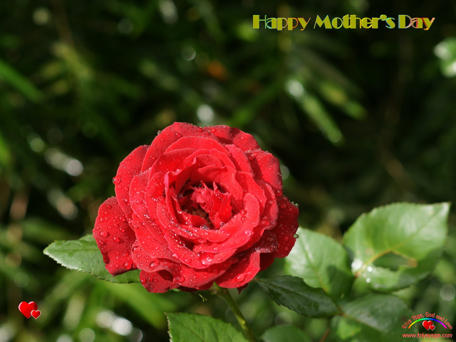 Happy Mothers Day Wishes Beautiful Flower Wallpapers