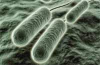 bacteria mal aliento