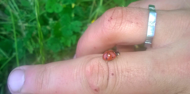 Ladybug on my finger