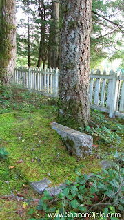 tree growing through a grave