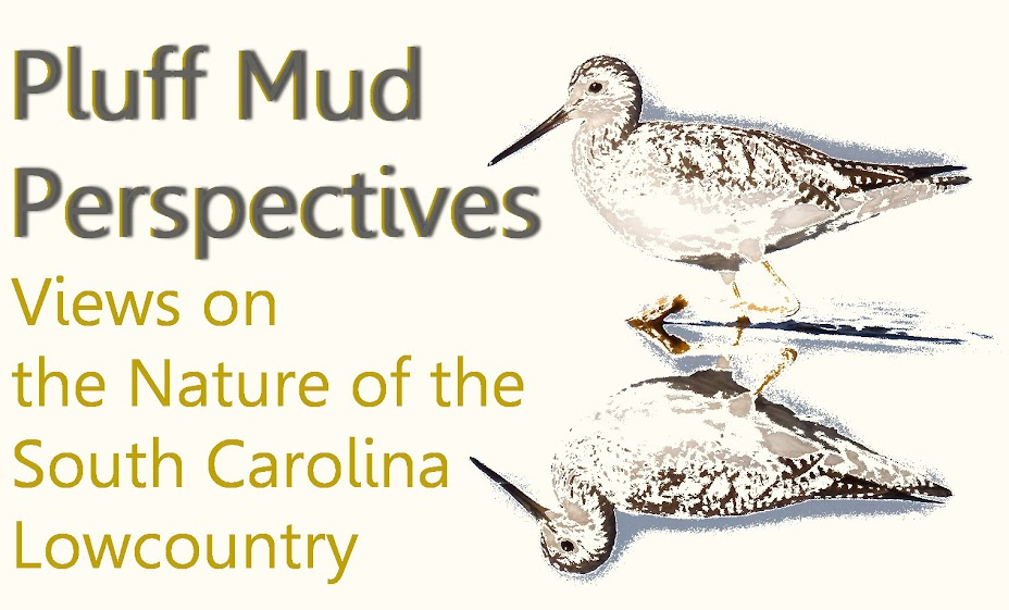 Pluff Mud Perspectives