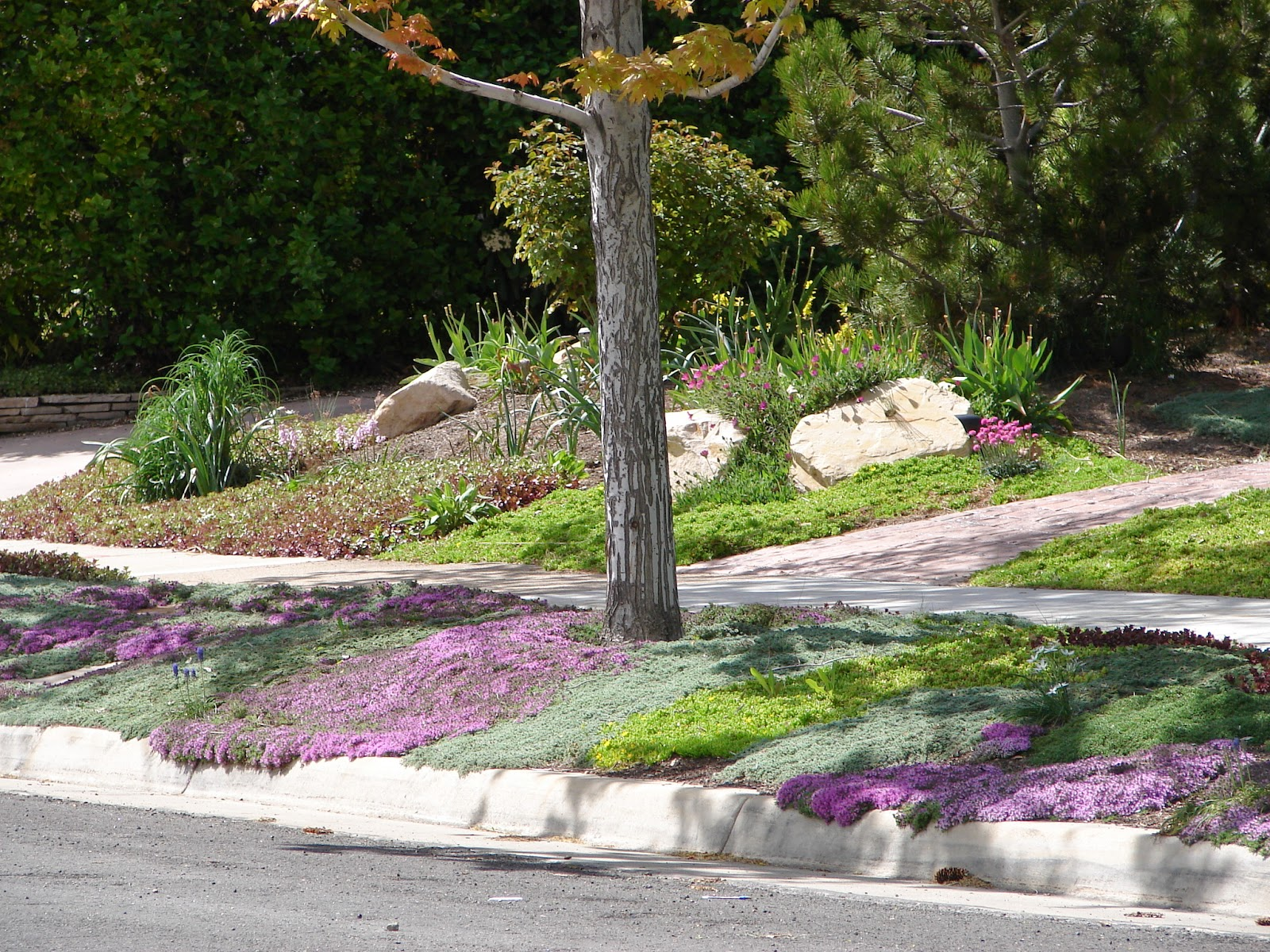 New Utah Gardener Ground Cover Thymes For Utah