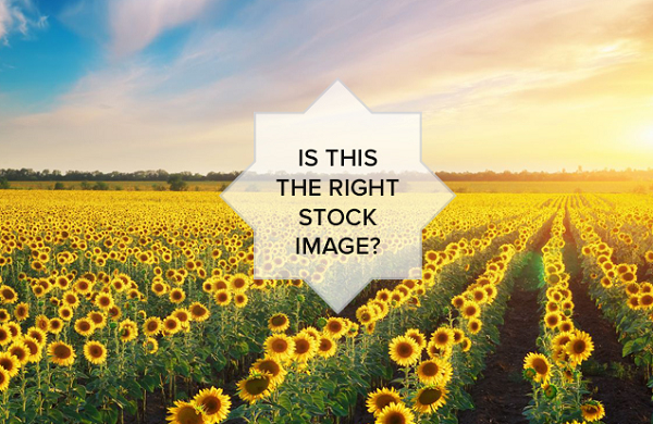 Top 5 Best Stock Photography Tips for Social Media Marketing