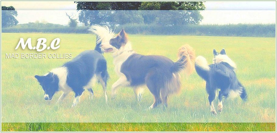 MBC (mad border collies)