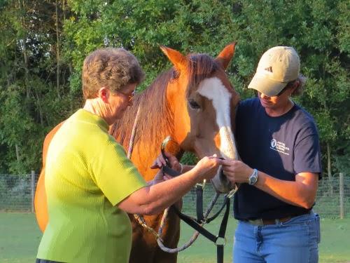haltering a horse