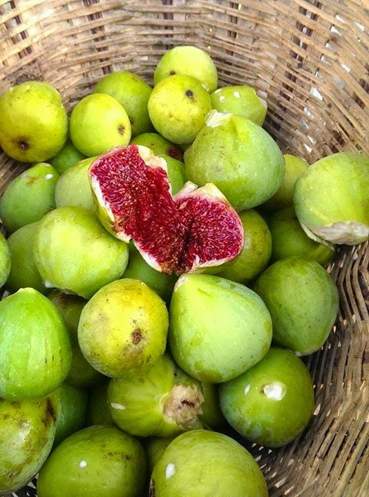 Green Santa Pau Figs