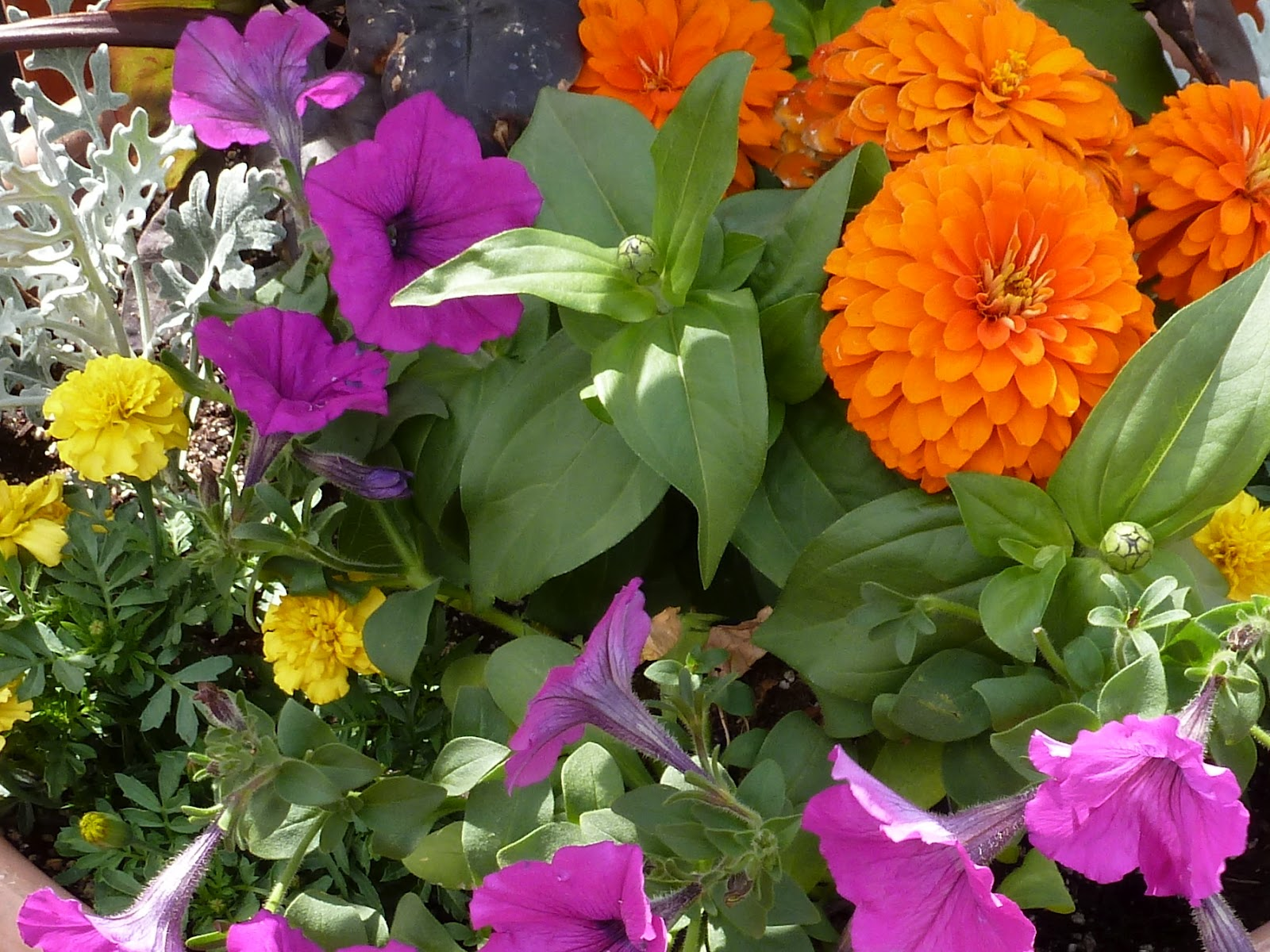 purple and orange flower garden Playing with Color in the Garden | Design Improvised