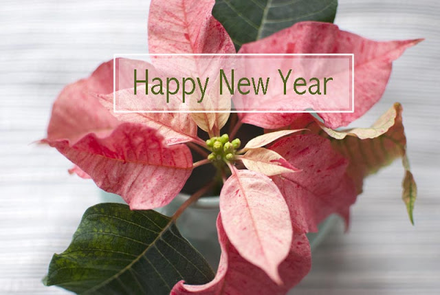 happy_new_year_fresh_beginning_pointsettia_light