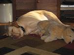 Me & My Puppy