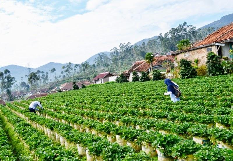 12 Tempat Wisata di Bandung Paling Spektakuler