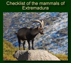 http://www.extremadurabirds.net/Checklist_Mamals.pdf