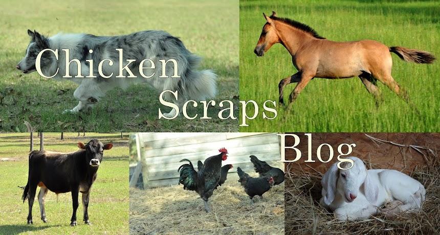 Chicken Scraps Blog
