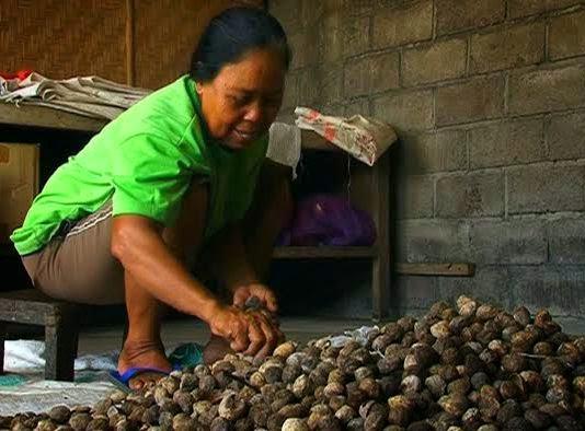 Coklat_Kemiri_Dari_Bali