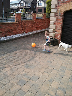 dog leaving ball alone