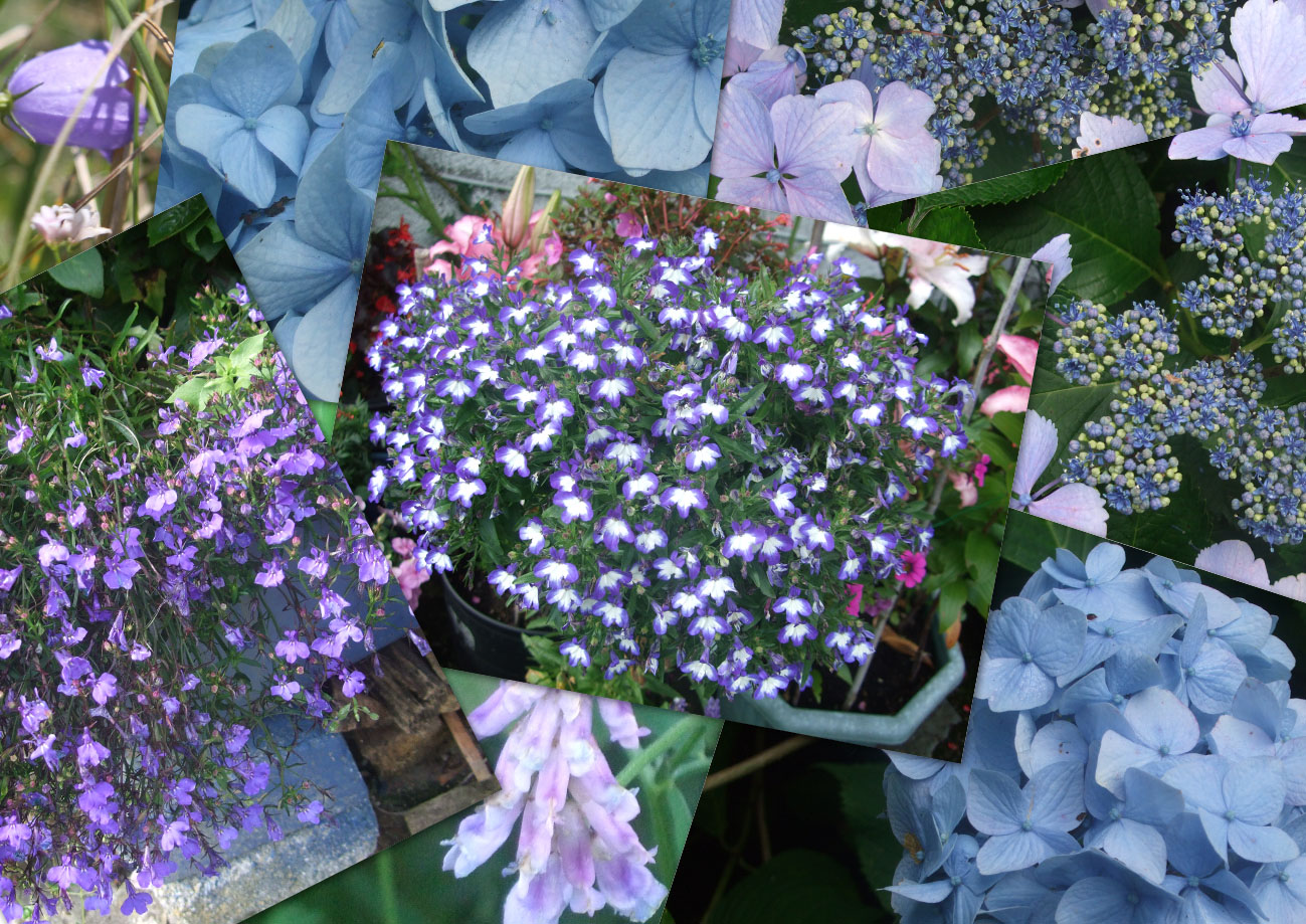 A Bad Witchs Blog Blue Flowers For A Blue Moon In August